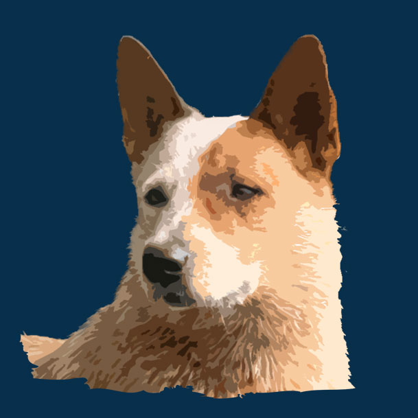 ACD T-shirts, mugs, art, gifts